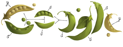 Google Logo: Gregor Mendel's 189th Birthday - Austrian scientist, founding father of modern genetics with his Mendel's Laws of Inheritance